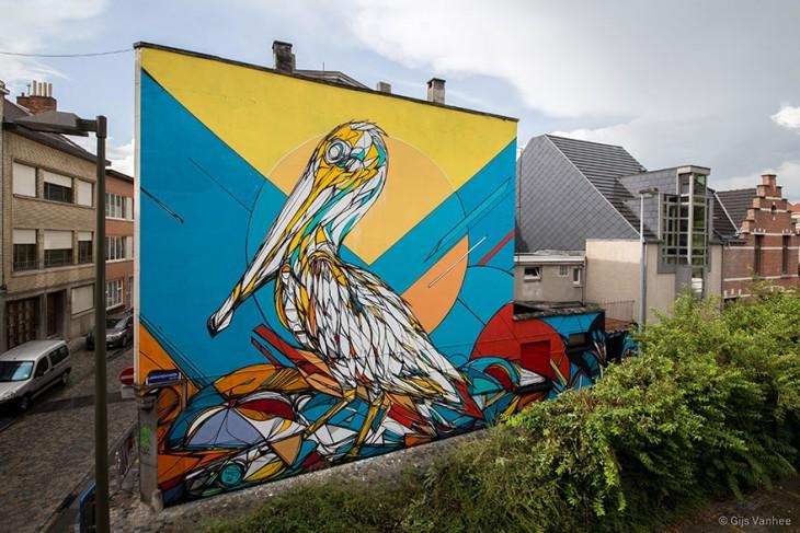 dzia pelicano