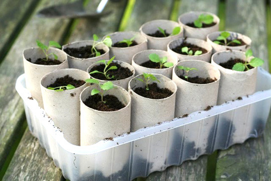 semillero con tubos de papel higienico