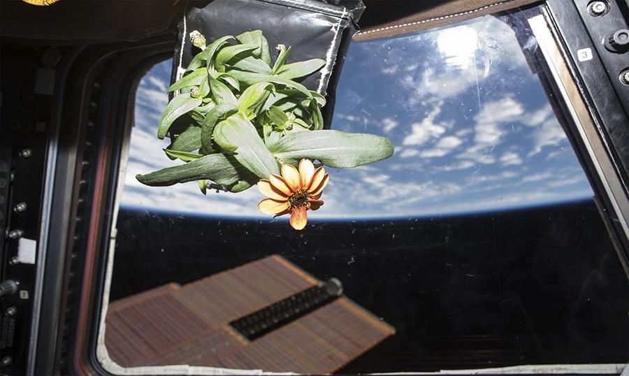 La primera flor de la estación espacial